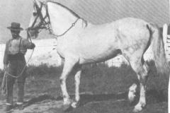 BILBAINO III