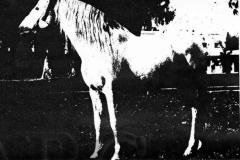 GORRON II 1954