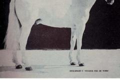 HACENDOSO IV