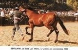 SEVILLANO IX 1980