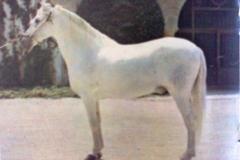GANADERO III 1955