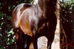 GANADOR VIII 1975
