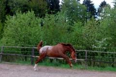 Koně na prodej Chayenne-nové fotky (1)
