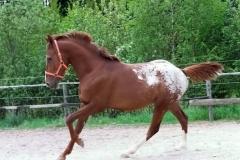 Koně na prodej Chayenne-nové fotky (2)