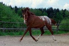 Koně na prodej Chayenne-nové fotky (3)