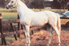 GEMELO II 1965